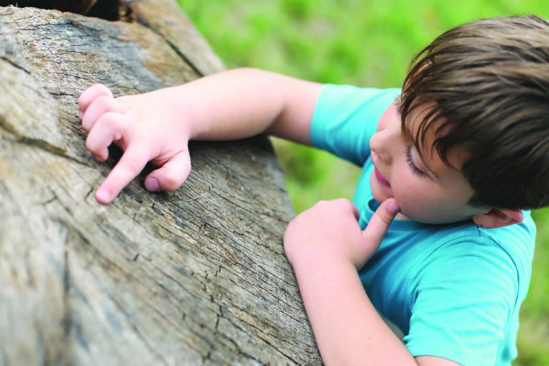 City of Trees: Little boy learning about tree rings
